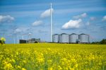 Biomass: the hidden face of the Energiewende