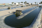 Can we save the algae biofuel industry?