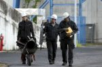 Why are German coal workers so powerful, when there are so few?