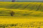 New German legislation will shake up EU biofuels market – but how?